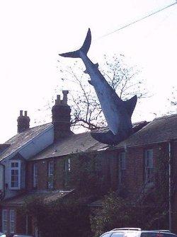 Westervillle_shark_house